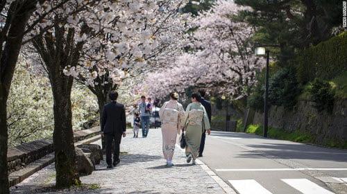 Đi ngắm hoa anh đào ở Kanazawa