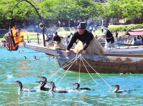 Dùng chim bắt cá ở Nhật Bản