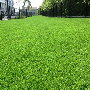 Artificial Grass- GardenMark LLC