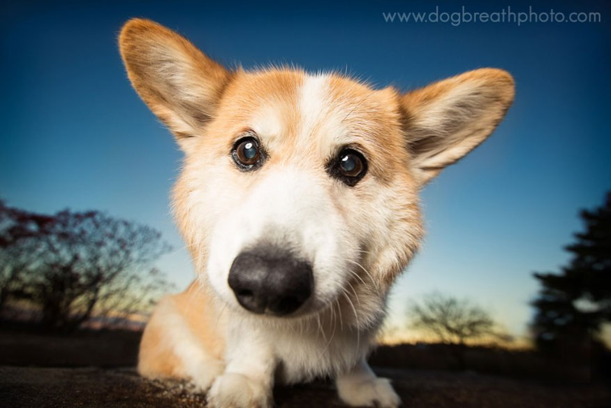 dog-breath-photography-kaylee-greer-17-cotw