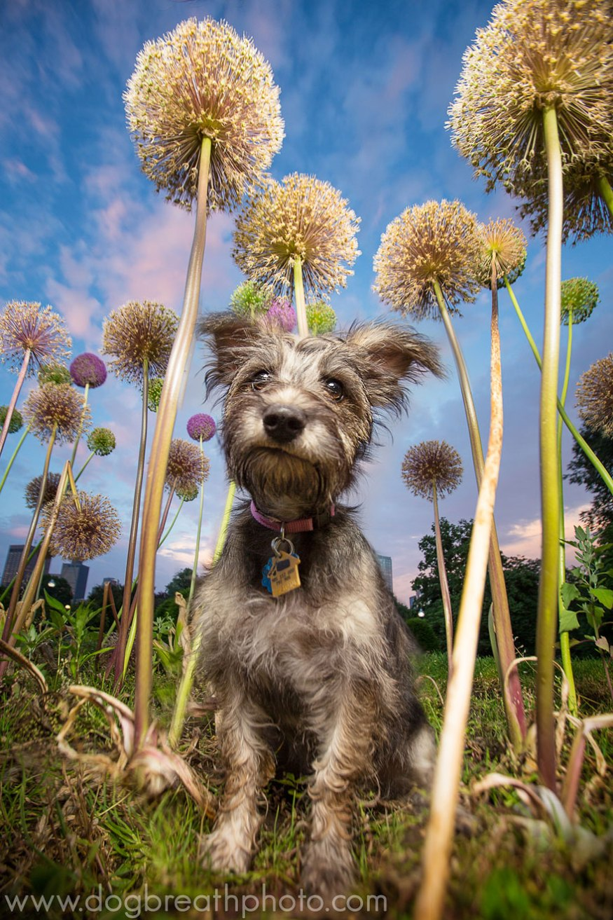 dog-breath-photography-kaylee-greer-27-cotw