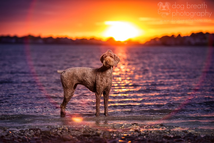 dog-breath-photography-kaylee-greer-36-cotw