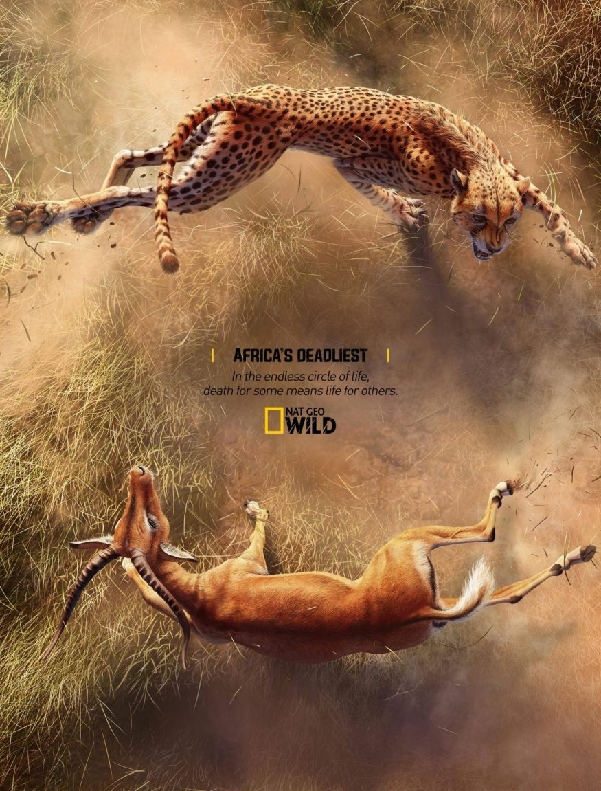 National Geographic Africa's Deadliest | Print Advertising