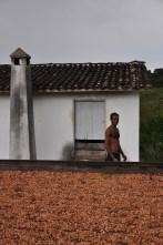 Amêndoas de cacau secando na barcaça, 2012, por Daniela Alarcon.