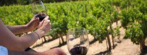 Esperienze in Campania wine tour