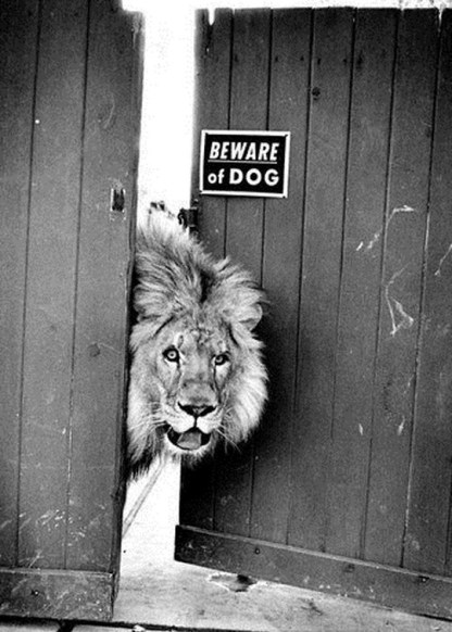 lion-beware-the-dog