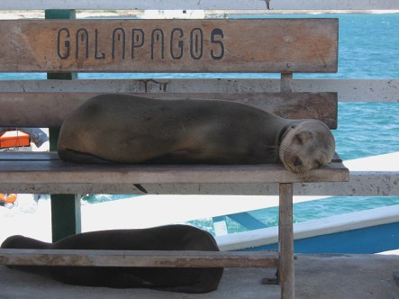Breakfast was on the Seal Bench - often with fishy breathed creature watching
