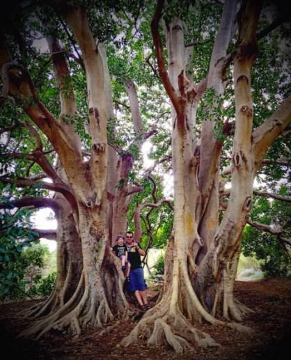 Adelaide Botanic Garde