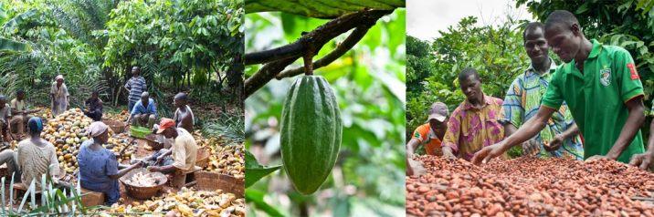 UTZ-Farming-collage