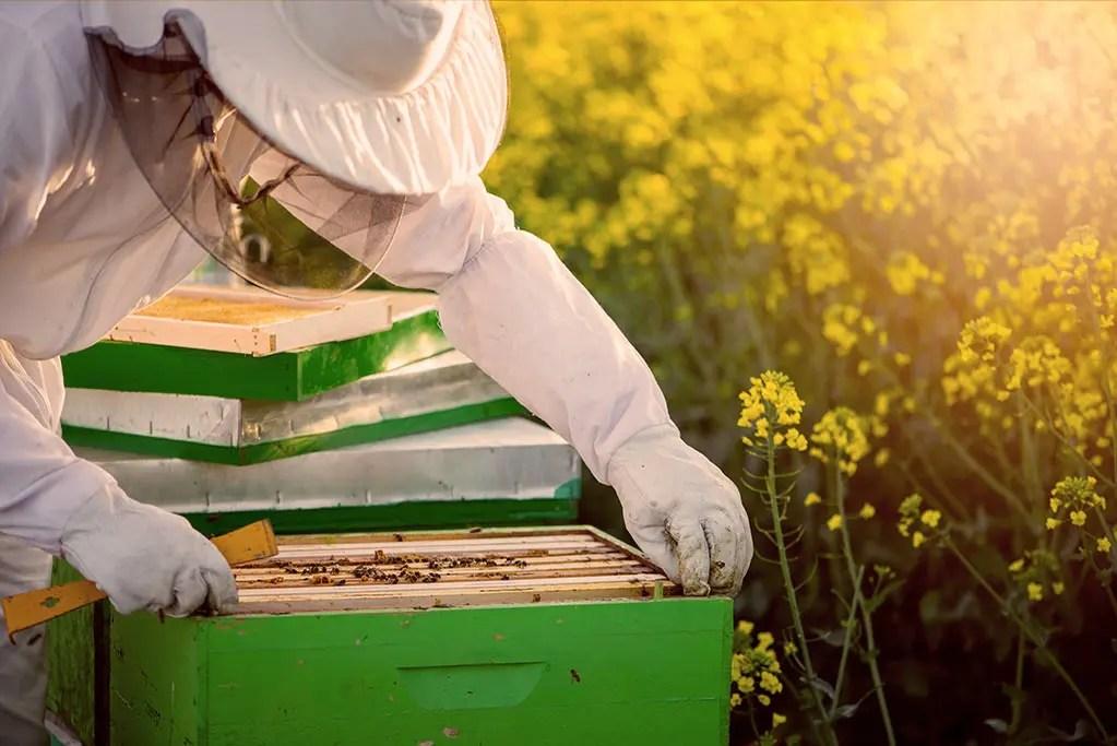 Beekeeping Equipment - Campbell's Gold