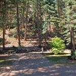 Premium RV sites with the San Juan National Forest as your neighbor at Blue Spruce RV Park (North of Bayfield Colorado)