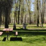 Grassy, shaded tent sites at Steamboat Springs KOA
