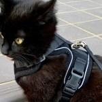 猫用ハーネスおすすめはどれ?