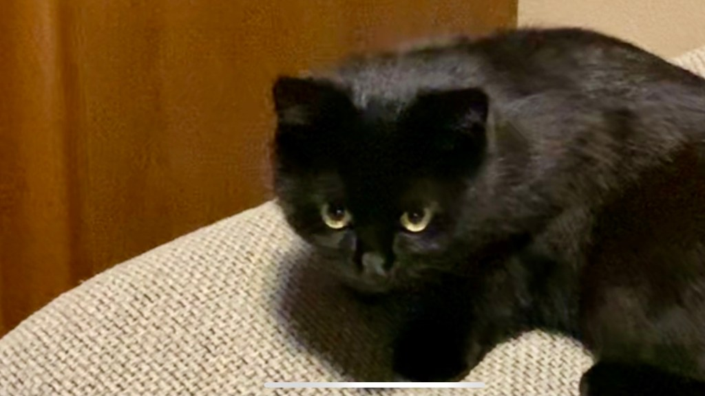 黒猫の福ちゃん