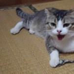 遊びに夢中の猫が息切れ
