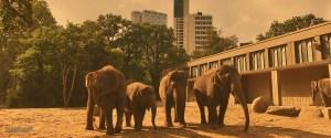2016_berlin_zoo_inhalt_002