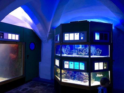 Skurril: Aquarien im Kreuzgewölbe