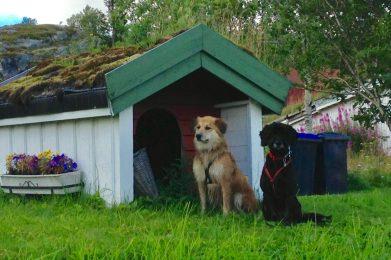 Hundehütte auf dem Camping Kabelvåg - Luxus für die Damen!