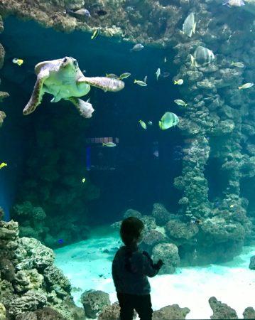 Schildkrötenbecken im Meeresmuseum Stralsund