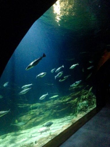 Helgoland-Tunnel-Aquarium 2012