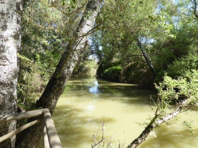 De rivier Guadiamar bij het gelijknamige bezoekerscentrum in Aznalcázar.