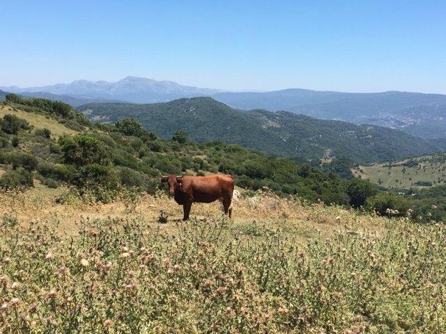 Zicht op de bergen van Alcornocales