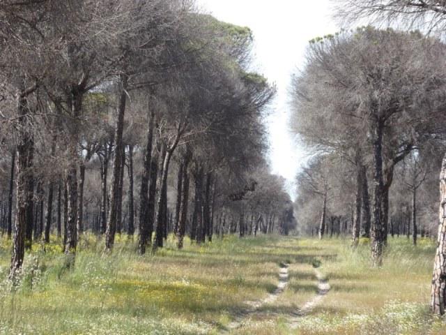 Dode bomen, kilometerslang. De brandgangen hebben hier niet geholpen. (nummer 5)