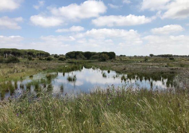 Het meer bij bezoekerscentrum El Acebuche.