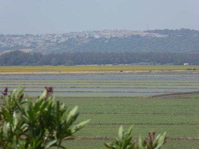 Rijstveld bij Benalup in het zuiden van Spanje.