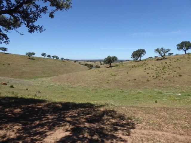 Het heuvelachtige landschap vlakbij Serpa.
