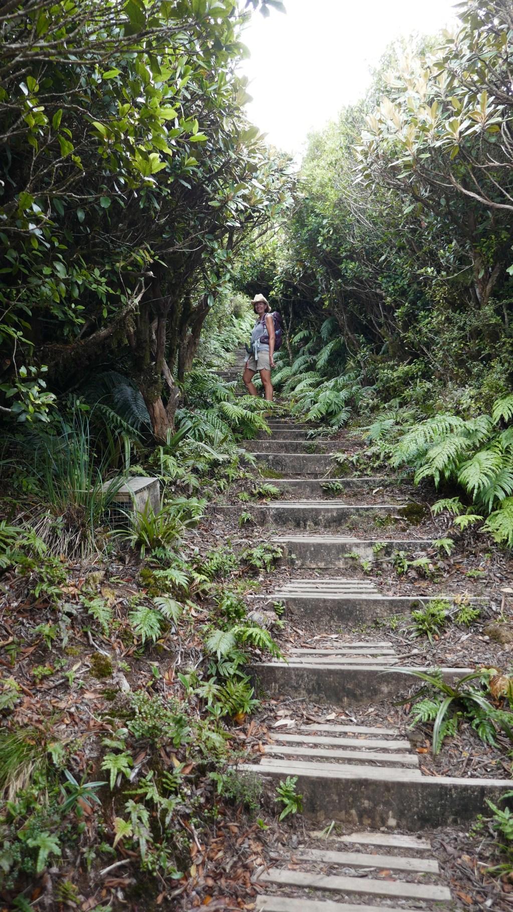 Mt. Taranaki Mangorei Track