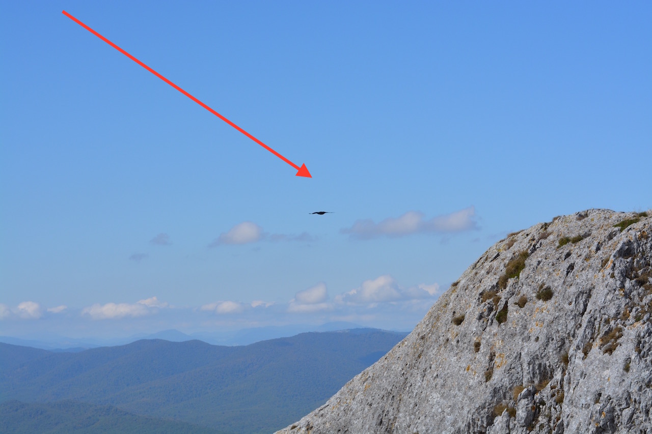 This is a chough - apparently. (Stuart's career in wildlife photography gets off to a modest start)