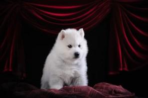 Husky on Stage