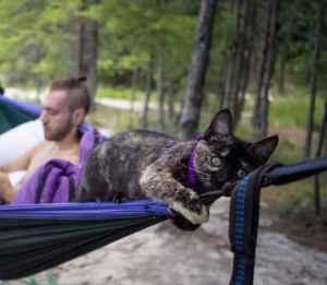 cat in hammock