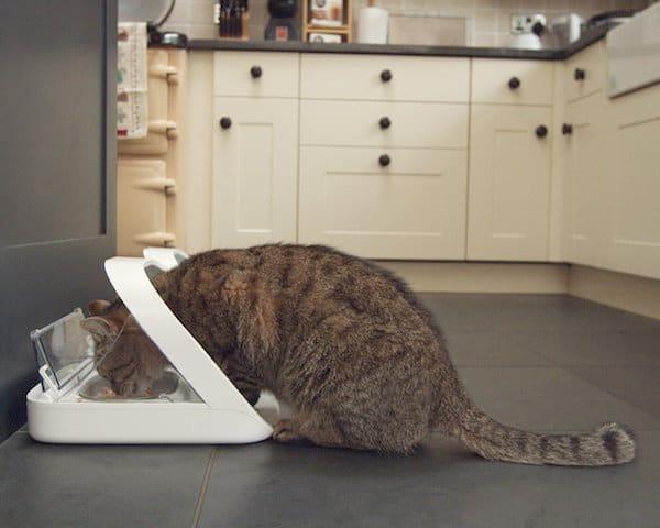 Sureflap feeder