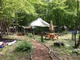 Wild Boar Wood