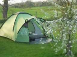 camping Hampshire