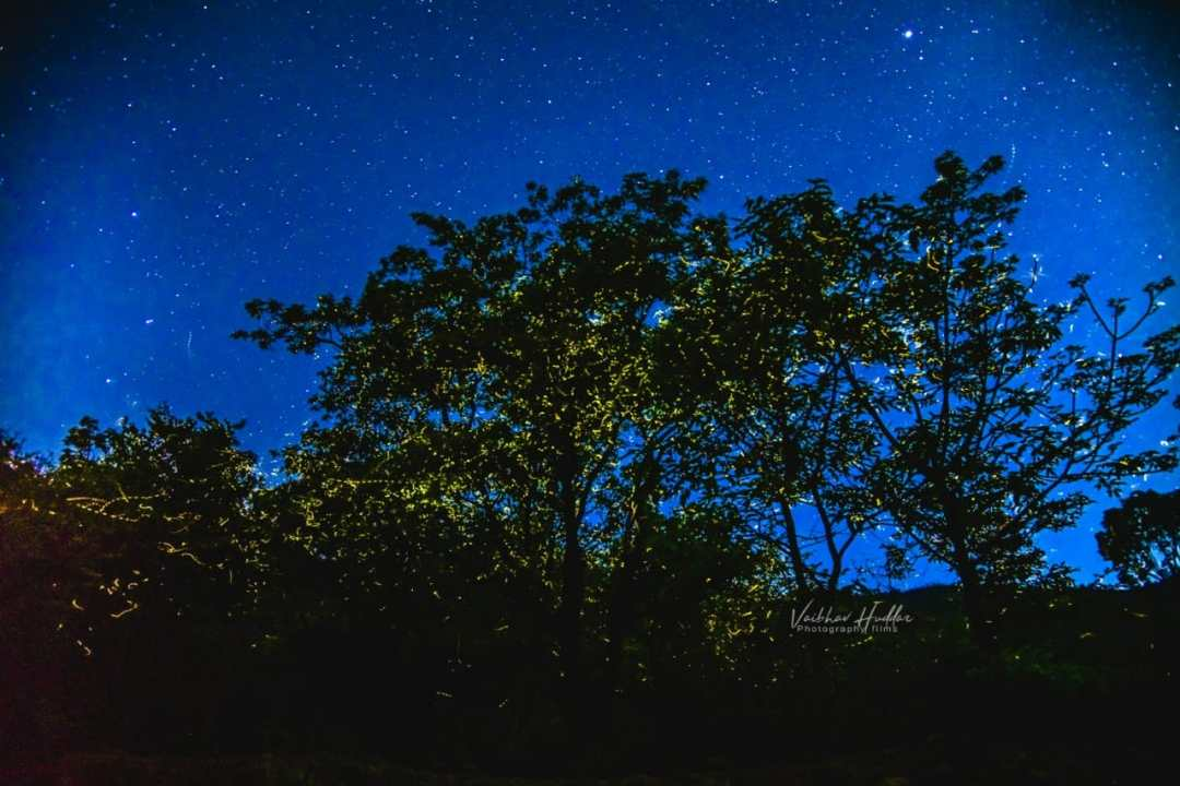 Gallery_Fireflies_3
