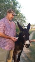 camp-house-donkey
