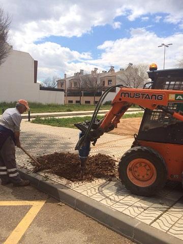Trabajos para reponer el arbolado en Andújar.