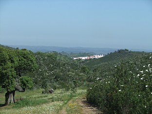Vía pecuaria recuperada por la Consejería de Medio Ambiente. Foto: Junta de Andalucía.