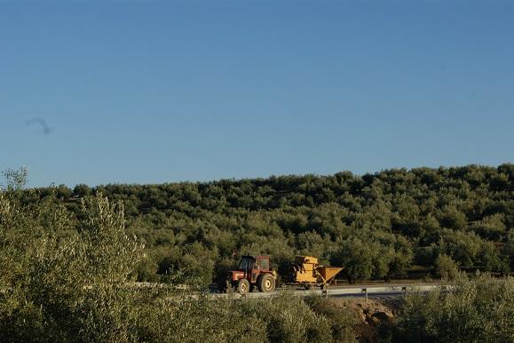 COAG-Jaén espera que no nos enfrentemos a un nuevo año de sequía.