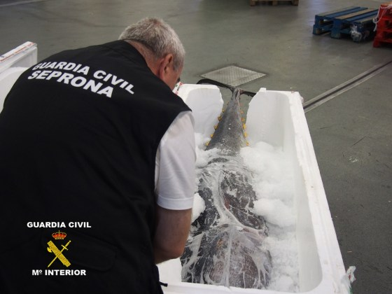 Intervenido atún rojo en Guarromán