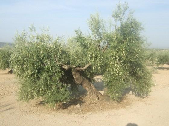 adversidades en la agricultura