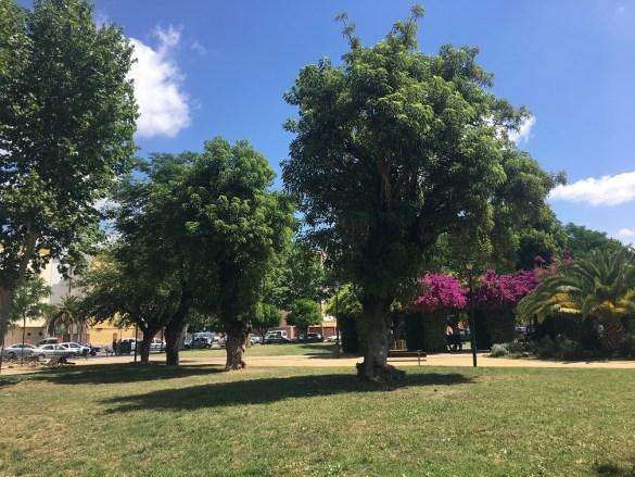 Árboles de Andújar