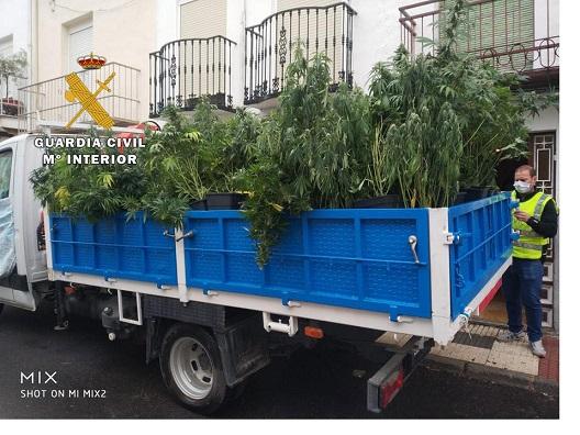 Tres detenidos por cultivar 130 plantas de marihuana en su vivienda.