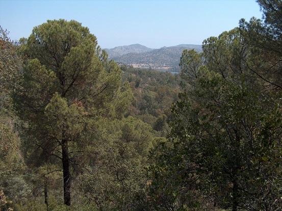 Andalucía celebra el Día Europeo de los Parques con el eslogan '¡La naturaleza, buena para tu salud!'