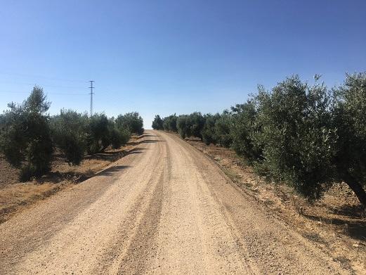 El Ayuntamiento de Andújar reactiva el arreglo de caminos rurales y pone en marcha un plan de desbroce y limpieza de cunetas.