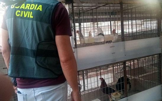 Investigan a una persona por robar gallos y pollos en una casa de campo.