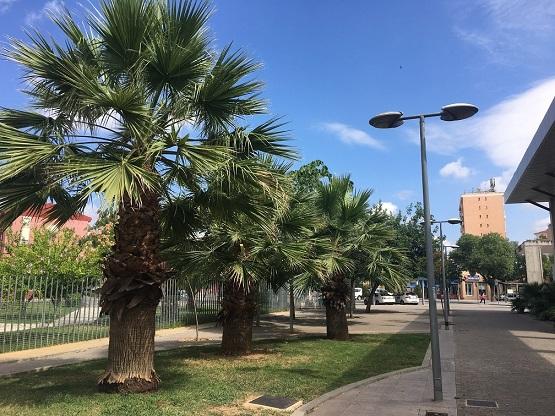 El aviso naranja por altas temperaturas continuará activo el lunes en Córdoba, Granada y Jaén.